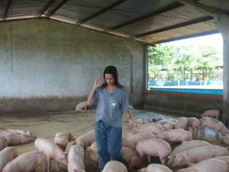 cuca porquinho 2